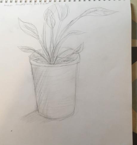 Plant – Gr. 5/6 Art